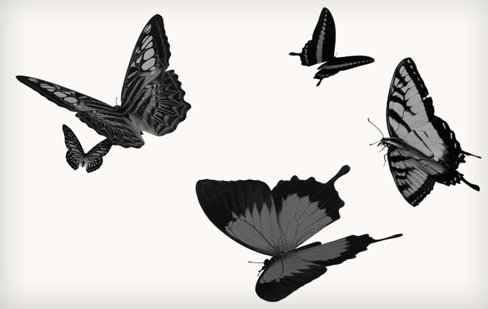 cargo design contact butterflies